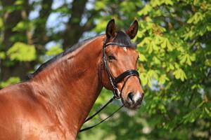 Walk of Silence, Erfolgspferd, Dressurausbildung mit Herz und Verstand, Sachsen
